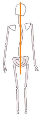 脊柱と中心軸のイラスト画像
